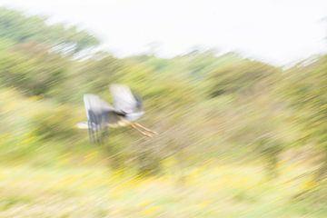 Héron en vol sur Lucia Leemans