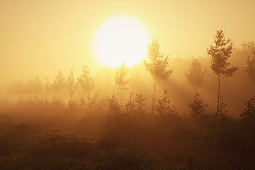 Morning moods van LHJB Photography