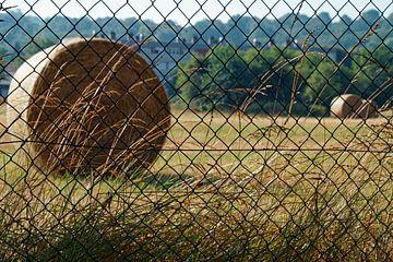 hooi opgerold in lanschap achter hek van wil spijker