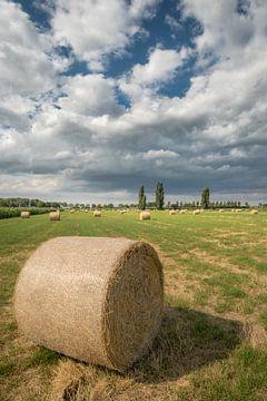 Heurollen - Heuballen auf dem Feld von Moetwil en van Dijk - Fotografie