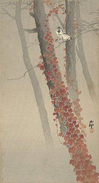 Roter Efeu von Ohara Koson