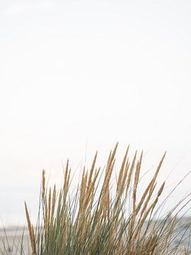 Riet | Pampas gras | Grasland | Zeeland | Duinen | Stranden | Minimalistisch van Stories by Pien