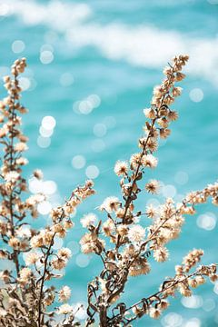 Getrocknete Blumen vor azurblauem Hintergrund von Bianca ter Riet