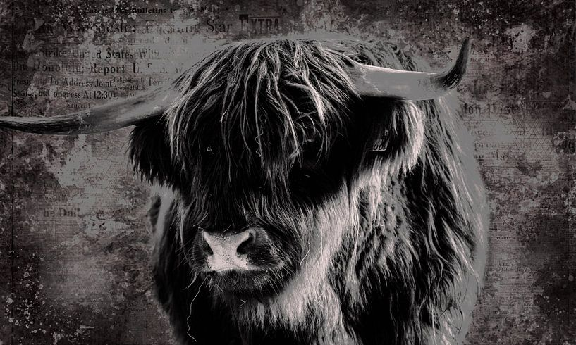 Fine Art Porträt schottischen Highlander in schwarz und weiß von KB Design & Photography (Karen Brouwer)