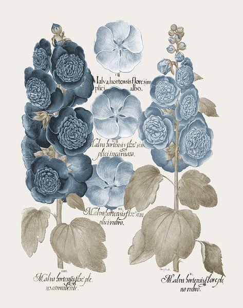 Basilius Besler-Stechpalmenblüte et al. von finemasterpiece
