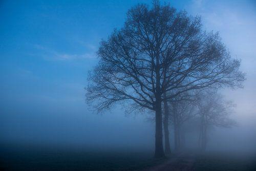 Mistige morgen in Diepenveen