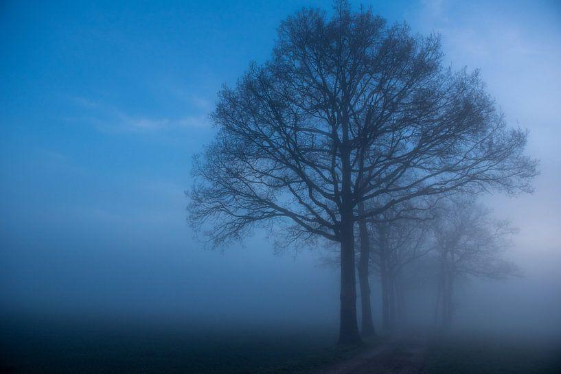 Mistige morgen in Diepenveen van Arjan Penning