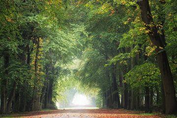 Bel automne sur Roelie Steinmann