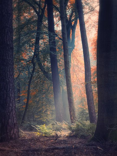 Transitions 3/3 (Herfst impressie) van Remco Lefers