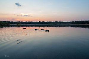 Entenküken bei Sonnenuntergang von lotte .de Bruyn