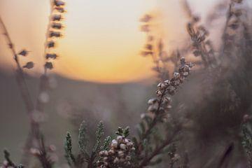 Blumen Teil 38 von Tania Perneel