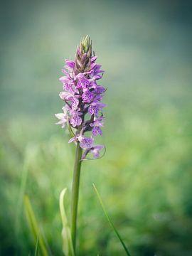 Purper Orchis van Ineke Nientied
