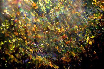 Herfst light van Marianna Pobedimova
