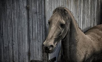 Paard van Ronald Rietveld