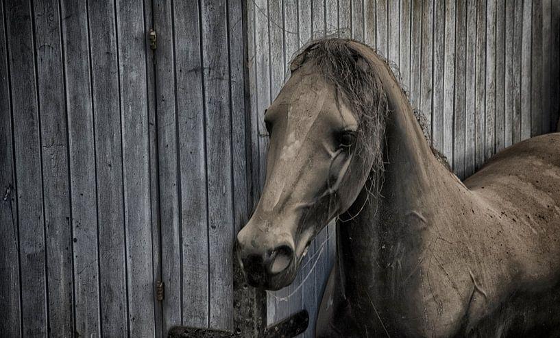 Paard von Ronald Rietveld