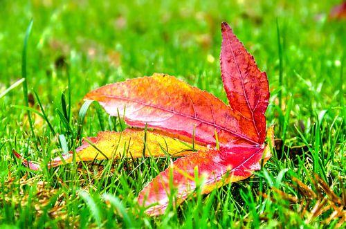 Herfstblad in het gras