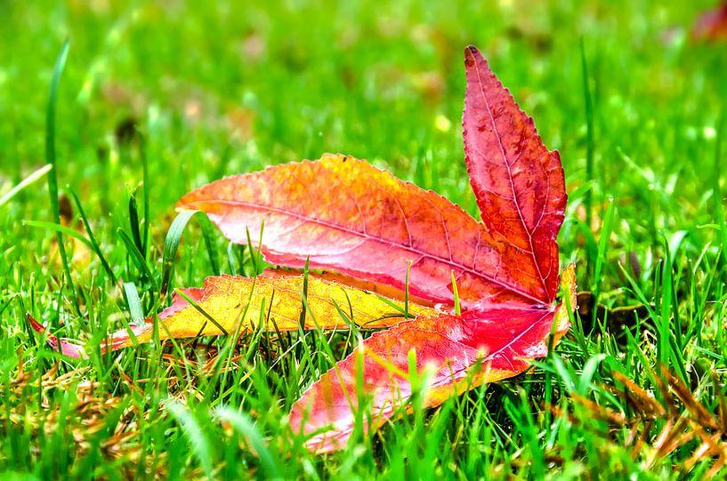 Herfstblad in het gras van Frans Blok