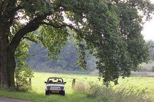 oude italiaanse fiat 126 oldtimer rustend onder een mooi eikenboom