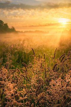 Zonsopkomst boven het Nationaal park De Weerribben-Wieden op een mooie mistige lente ochtend met war van Bas Meelker