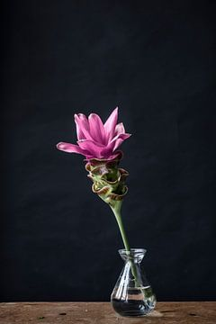 Blume in Vase von Jenneke Boeijink