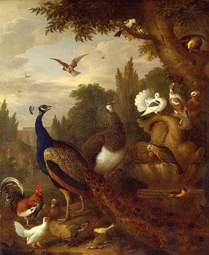 Pfau, Papageien, Kanarien- und andere Vögel in einem Park, Jakob Bogdány