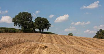 Oogsten in Zuid-Limburg van John Kreukniet