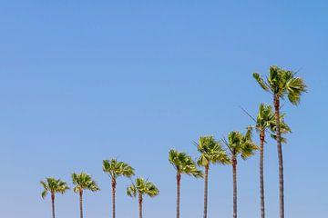 California Vibes von Melanie Viola