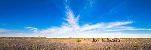 Madikwe Plains van Thomas Froemmel