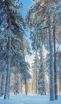 Winterlandschaft mit Sonne am späten Nachmittag, Finnland von Rietje Bulthuis