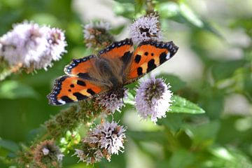 Schmetterling von Simone van der Heide