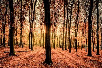 Lumière du soleil dans la forêt sur Sjoerd van der Wal