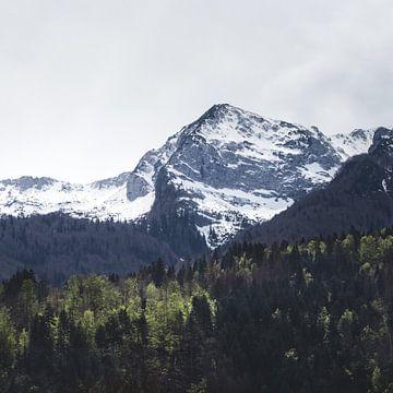 Winter und Frühling - grüne Bäume und schneebedeckte Berge von Patrik Lovrin