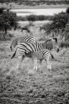 zebra camouflage van Paul Piebinga