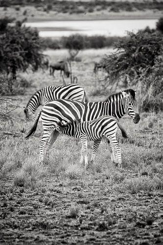 zebra camouflage van