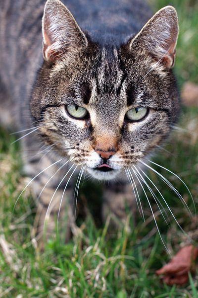 Katze van Falko Follert