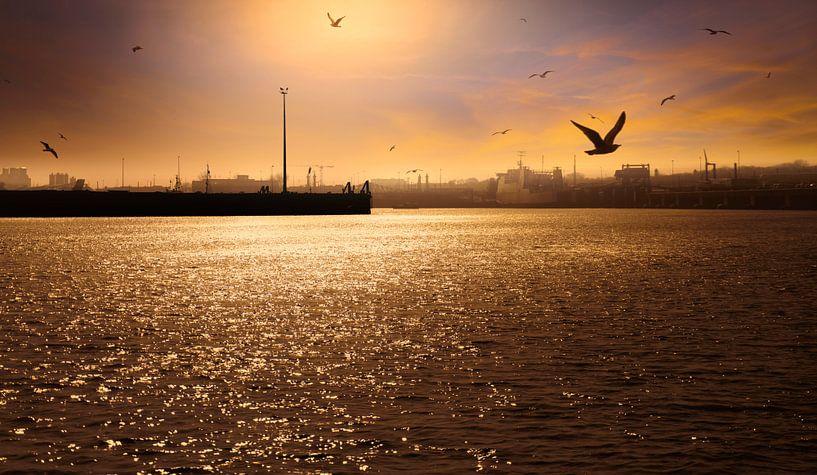 0777 Evening in the Harbour van Adrien Hendrickx