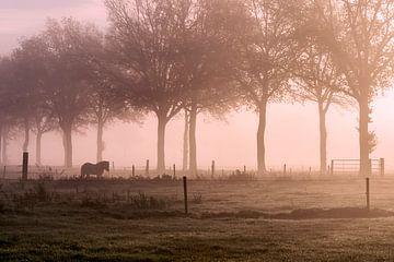 Pferd im Nebel von Ellen Gerrits