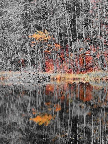 Herfstkleuren I van Ilona Picha-Höberth