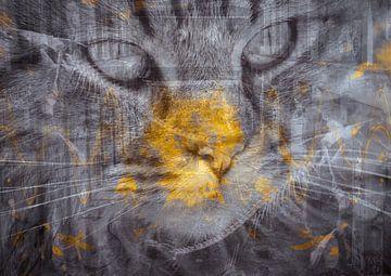 Streunende Katze von Andreas Schulte