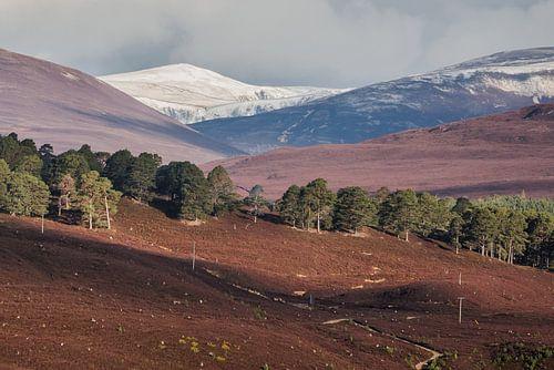 Berglandschap in lagen van