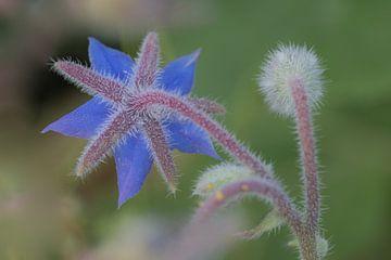 Wildblume von Moetwil en van Dijk - Fotografie