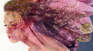 Gänseblümchen, Morgentau von Dreamy Faces