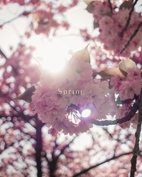 Bloesemboom met 'lente' tekst | Stadspark Sittard van Tom de Bruijn