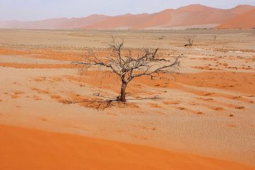 NAMIBIA ... Namib Desert Tree V von Meleah Fotografie