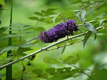 paarse bloem van Brigitte Koster