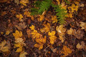 Herfstbladeren op de grond