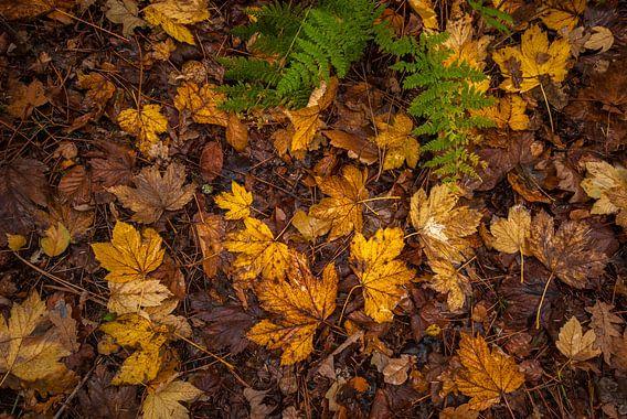 Herfstbladeren op de grond van Margreet Frowijn