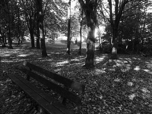 Bankje in het Almeerse bos