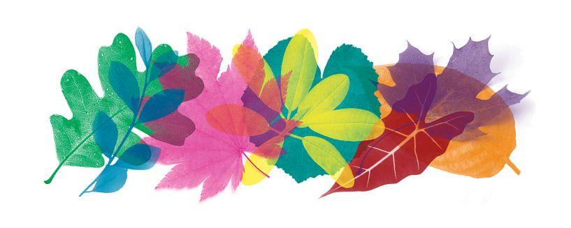Colorful leaves van Harry Hadders