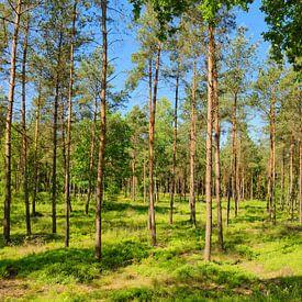 Sonniger Wald im Frühling van Gisela Scheffbuch